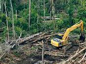 Nestlé, Cargill pression monte Sinar Mas, géant l'huile palme… déforestation