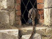 Enfermés dans fort (Jacques Jouet)