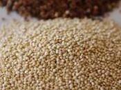 Quinoa, graine sacrée incas