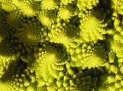 fractales dans nature.