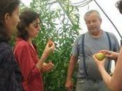 l'étal champs, parcours fruits légumes