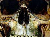 dernier clin d'oeil d'Alexander Queen Mort