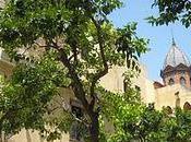 divino Salvador Sevilla