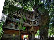 plus grande maison arbre photos)