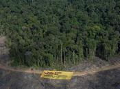 Indonésie Greenpeace lance appel