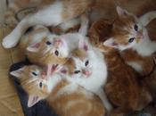 chats maison (Jack Kerouac)