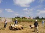 Cultures produits marocains naturels