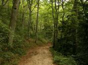Promenons nous dans bois…