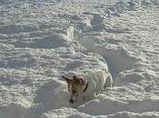 trouve chiens Jack Russell Agadir