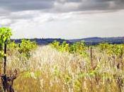 Sans traitements l'agriculture conventionnelle, vignes