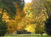Pourquoi arbres sont-ils beaux automne