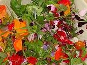Focus culinaire; fleurs comestibles idées recettes