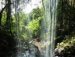 Tarzan Jane dans jungle