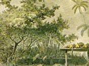 James Cook Premières collections d'objets polynésiens