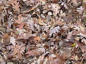 Quizz: Trouver personnage caché dans feuilles