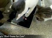 Game Cats, l'appli iPad pour matou...