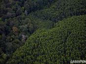Forêts Cancun, après