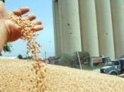 farine utilisée comme aliment bétail