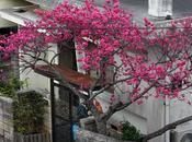 Photos février Okinawa