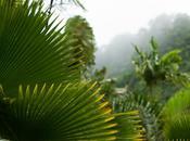 Jardin tropical Balata