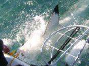 laissez requin gâcher vacances!