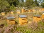 Produits ruche