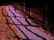 Marche l'ombre