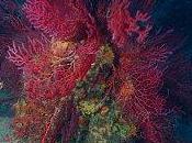Stage plongée sous-marine Marseille avec coraux
