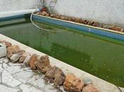 Remplissage bassin nage test circuits traitement naturels
