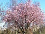 Vive printemps banlieue