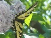 Faut taquer papillons (slam)