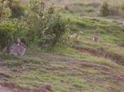 Comment photographier lapins garenne