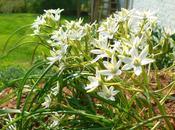 Fleur Identifiée Trouver