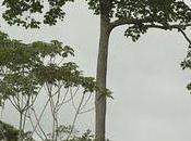 L'huile noix Brésil d'Amazonie