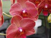 Floralies internationales Taipei