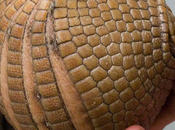 Mercredi, converge] Reinventer boule