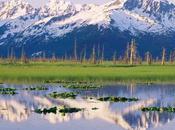 Alaska Nous Voila
