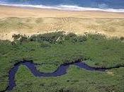 Réserve nature courant d'Huchet, Landes