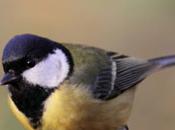 Bordeaux arbres oiseaux dans smartphones