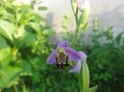 fleur peut cacher autre !!!!