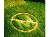 Monsanto frappe encore