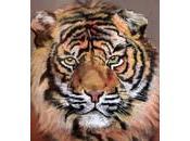 Portrait star, portraits monde... tigre: vous présente quatre nouveaux tableaux