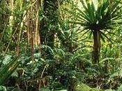 """""""Forêts tropicales humides, avenir planète"""" expo voir"""