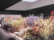 L'hortus conclusus Peter Zumthor