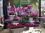 Flowertrials 2011, présentation nouveautés horticoles hollandaises.