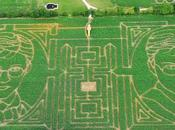 Harry Potter dans champ maïs