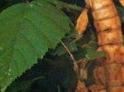 étrange ressemblance avec feuilles mortes