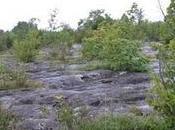 Jura pays minéral végétal