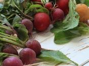 radis toutes couleurs pour tartine très fraîche