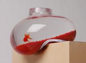 Pour poisson rouge…